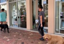 Luna Off Leash & Jewel On Leash in Downtown West Palm
