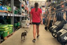 Mackie the Boston Terrier at Home Depot