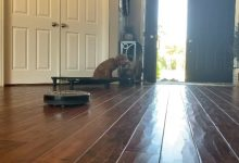 Huey 16wks old House Manners w/ Roomba