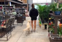 Trigger Off Leash At Lowes